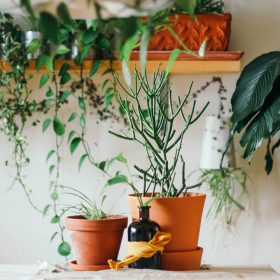 house plants kitchen
